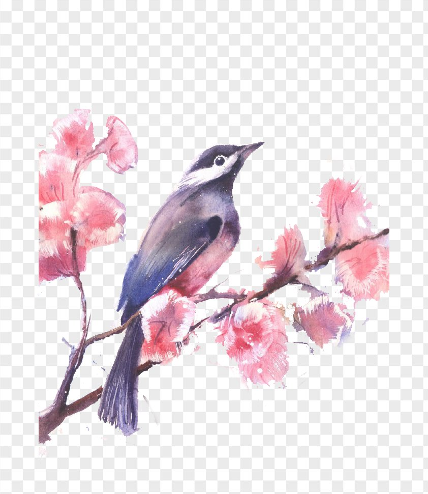 Watercolor Painted Birds And Flowers PNG