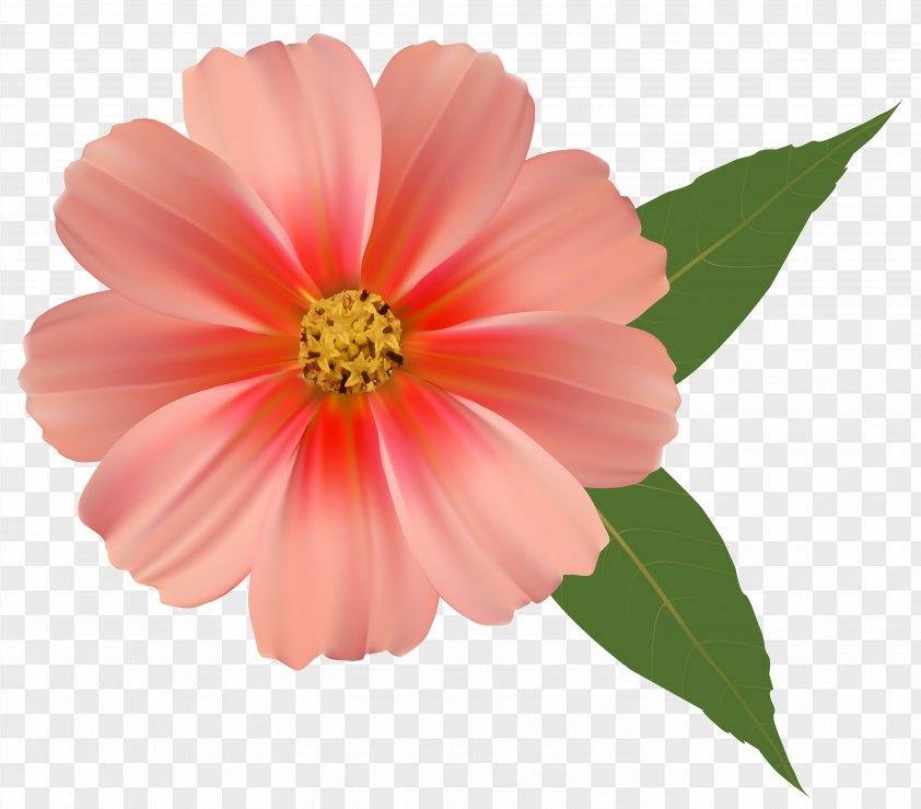 Orange Flower Image Clipart PNG